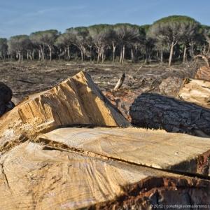 pineta-marina-grosseto-incendio02