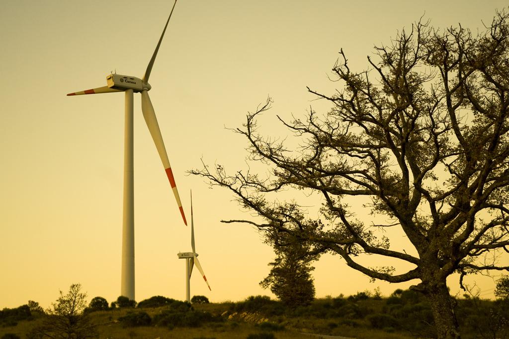 Le proporsioni gigantesche tra l'enorme quercia e il mulino eolico