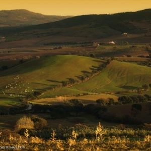 Panorama da Grancia, verso Scansano. 5 minuti prima del tramonto, colori caldi e ombre lunghe