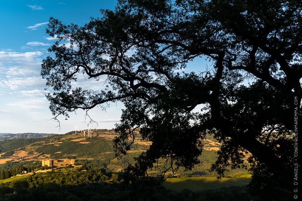 Quercia davanti al castello di Montepò