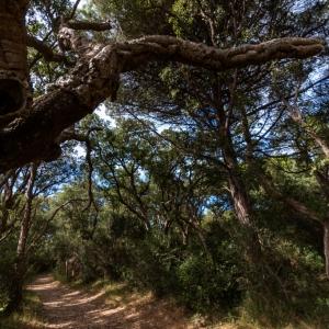 Bosco di querce di Patanella