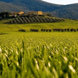 poderi-toscani_007