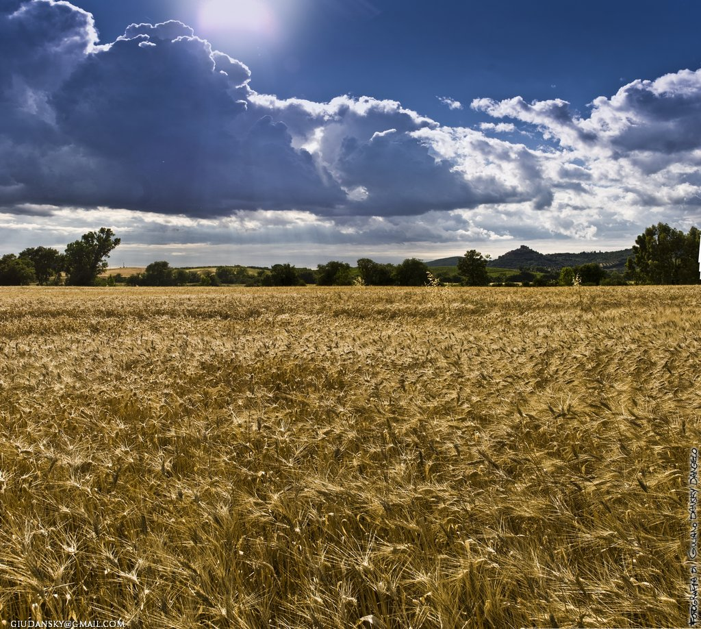 Campi di grano sulla dritta di Montemassi