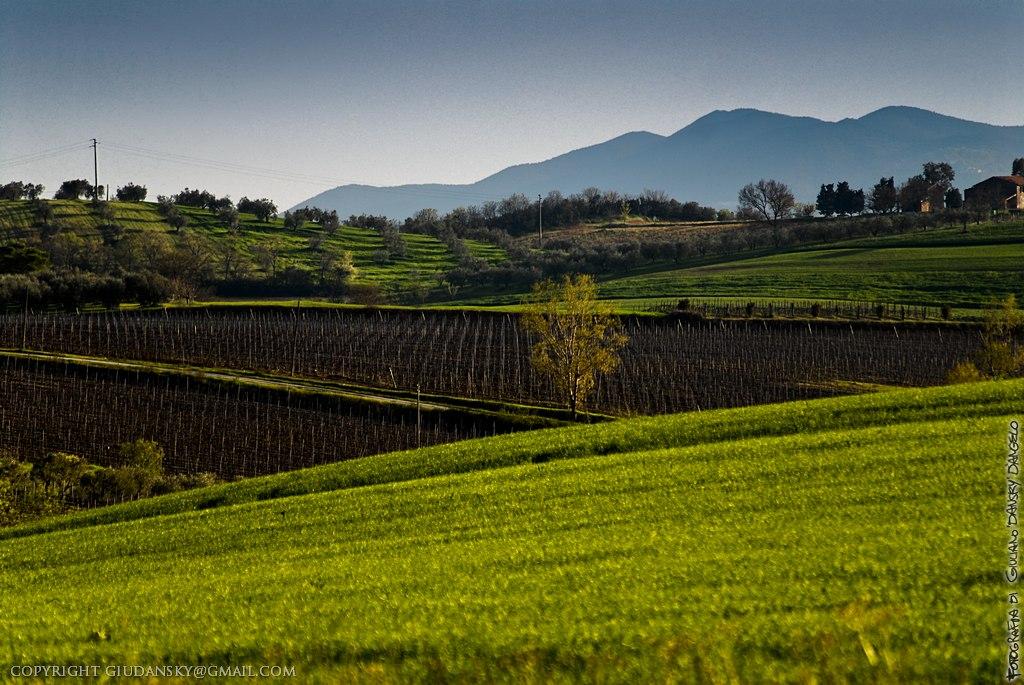 Campagna con vigne sotto Montemassi