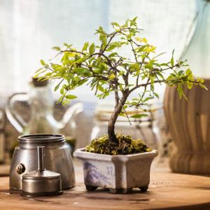 Caffè e bonsai