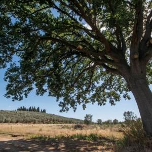 quercia e granturco-002