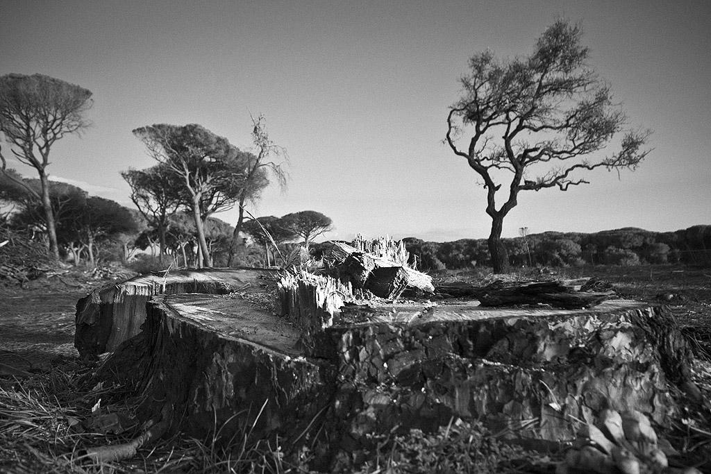La pineta bruciata #2 galleria fotografica