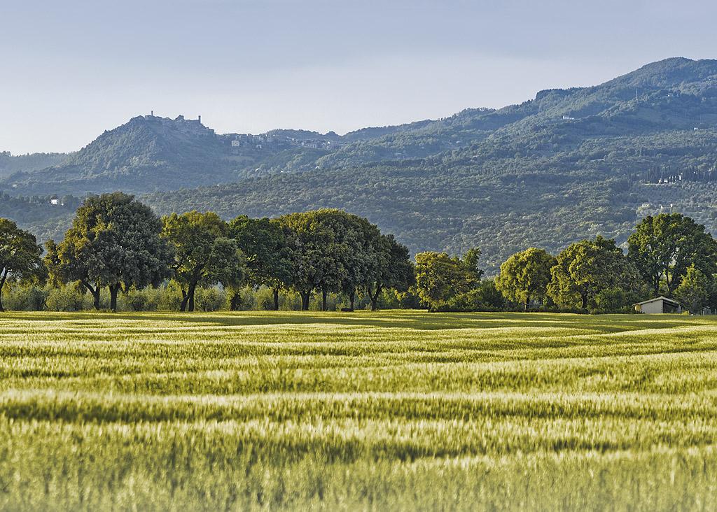 Le verdi querce e Roccaterighi