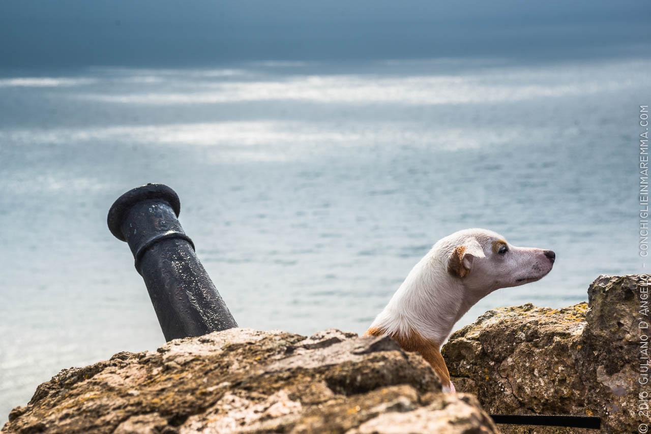 Cani e Cannoni