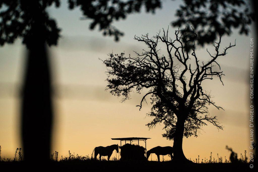 Cavalli che mangiano sotto una quercia al tramonto