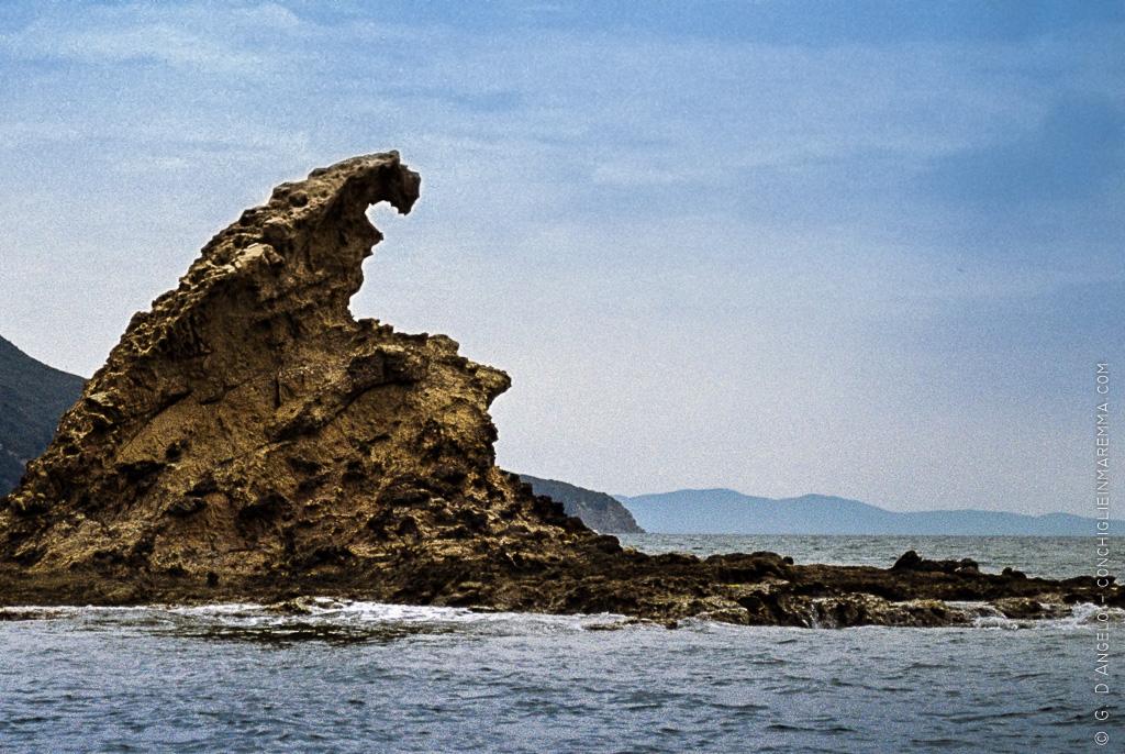 Aquila e squalo a PuntaAla